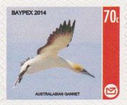 Baypex gannet CAL